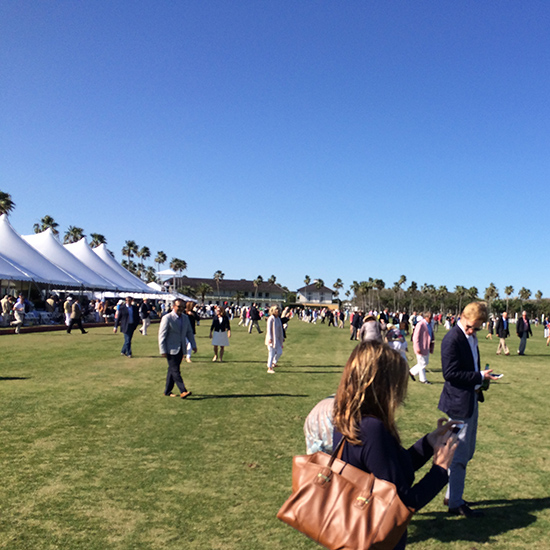 Every polo match has the customary treading-in of the divots by the spectators...